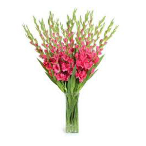 Deliver Christmas Flowers to Chennai